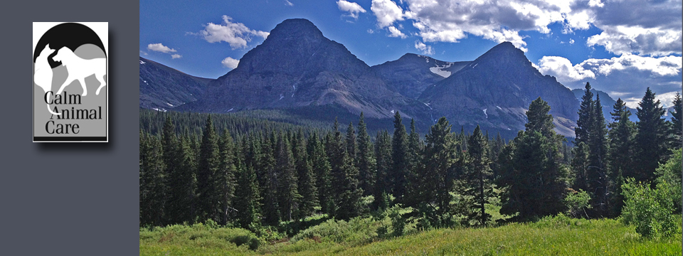 Montana – The Treasure State